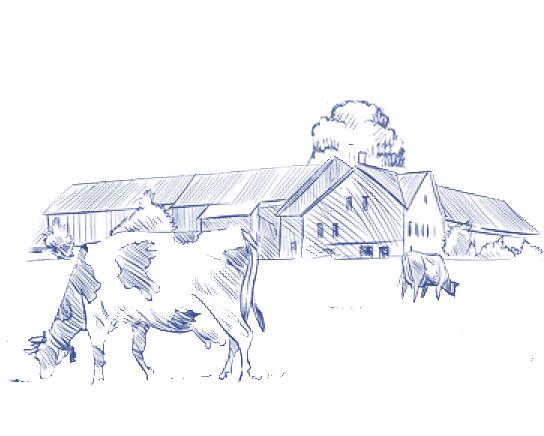 Left Cows